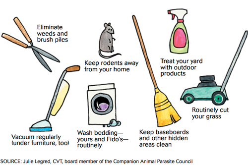 What You Can Do to Prevent Fleas