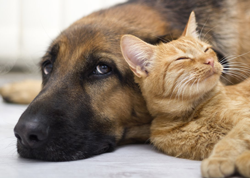Cat and Dog on Heartworm Preventative