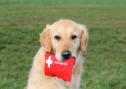 Remember Pets in Your Disaster Preparedness Plan