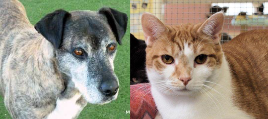 Senior Pet Wellness Month Specials
