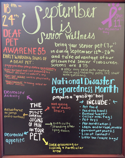 Senior Pet Wellness Month