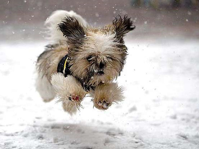 Baby, It's Cold Outside: Protect Your Pet from Winter Weather