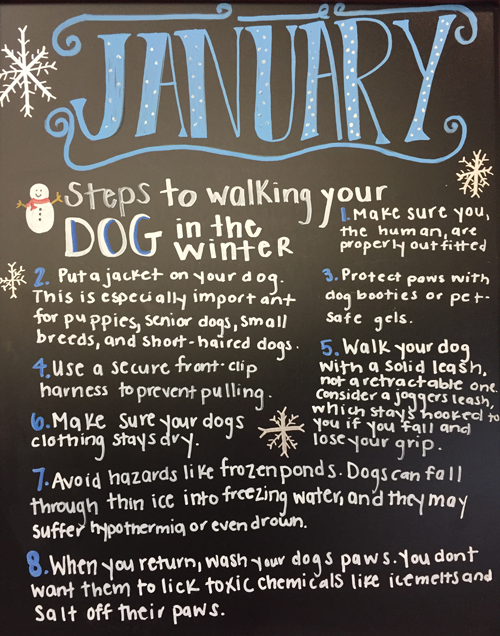 8 Steps to Walking Your Dog in the Winter