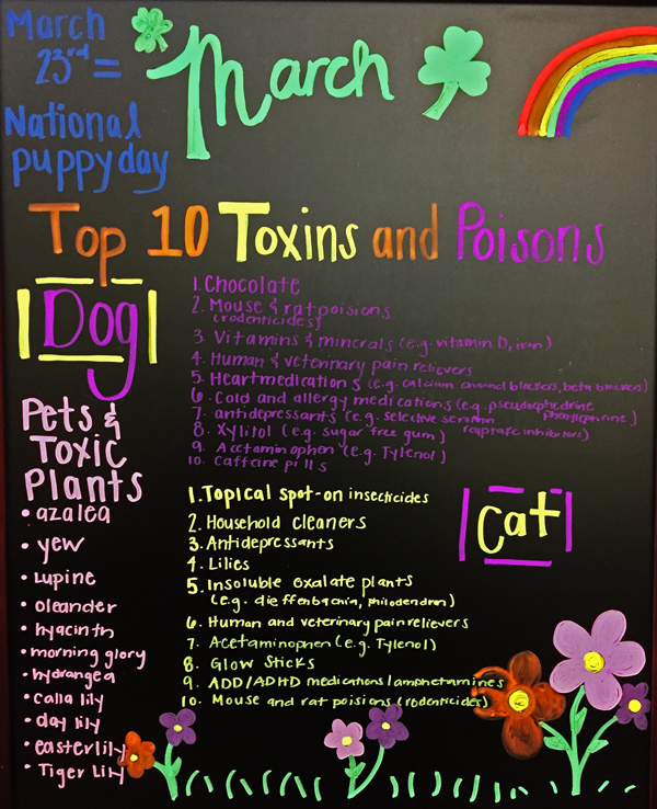 Top 10 Toxins for Dogs and Cats