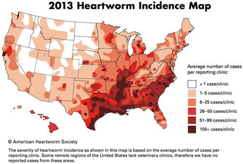 Heartworm Disease Facts and Myths
