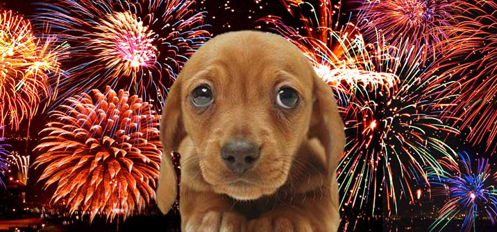 Fireworks Safety Tips for Your Pet