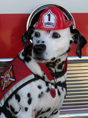 Be Prepared! July 15th is Pet Fire Safety Day