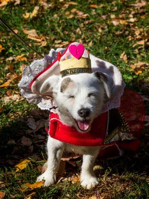 Howl-o-ween with Your Pet!