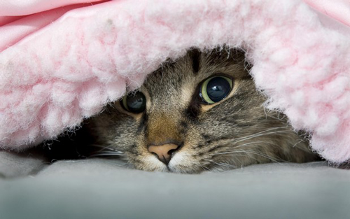 How to Keep Your Pets Safe and Comfortable in Frigid Weather