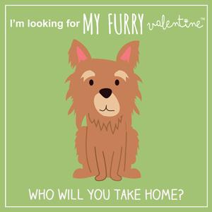 My Furry Valentine Adoption Event